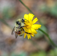 Bee (leyannmeau) Tags: nature natural strathconapark beautiful turtleisland
