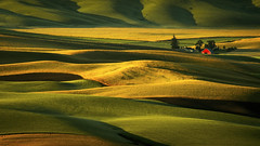 Palouse Hills at Sunrise (hoangthienmu) Tags: palouse hills steptoebutte statepark house curves light shadow summer morning palousehills usa washington abstract agricultural agriculture background barn builtstructure countrylife countryside curved desolate distant farm farmhouse farming farmland field ground hill hilly land landscape nature outdoors pasture remote rural rurallife rustic scenic shack shed silos sunny warmtone wooden