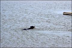 West Kirby Wirral 230816 (15) (Liz Callan) Tags: westkirby wirral sea seaside beach rocks boats ben bordercollie dogs sky water waves buildings lizcallan lizcallanphotography