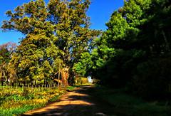 Camino. (jagar41_ Juan Antonio) Tags: imagendecampo campo calle callejon arboles arbol