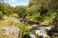 River Taw (Keith in Exeter) Tags: river taw source babbling stream brook granite rock fern grass bush tree gorse rowan dartmoor nationalpark devon england outdoor landscape