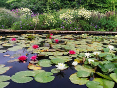 Water lilies at Hidcote Gardens , Cotswolds (darklord.vic) Tags: iphone6plus cotswolds waterlilies hidcote fusionhdr