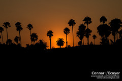 Trees (Connar L'Ecuyer) Tags: socal beach ocean sunset santabarbara wharf landscape water pier