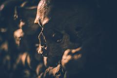 Catacombs; Paris, France (erik-peterson) Tags: 2013 bone bones catacombs d3s dead death erikpeterson europe france holiday paris skeleton skull tomb trip underground vacation winter
