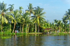 Appelley (Kerala), India (DitchTheMap) Tags: 2016 appelley backwaters india kerala landscape nature sunset vacation allepey asia background backwater beautiful blue boat coconut concept flickr horizon house houseboat indian palm paradise river scenery sea ship silhouette sky summer tourism travel tree tropical water