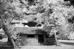 french barn  1 (photoautomotive) Tags: france french europe infrared ir barn southwesternfrance trees sky clouds tiles leaves tree grass shadows window door outside shadow leaf olympus
