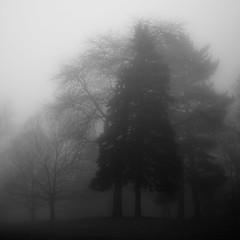 Lakeside Fog 046 (noahbw) Tags: d5000 nikon abstract autumn blackwhite blackandwhite bw fog foggy forest landscape light mist misty monochrome natural noahbw quiet shoreline silhouette square still stillness trees woods