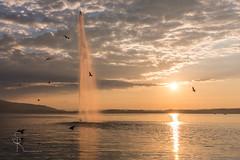 Abendstimmung in Zug (SteffPicture) Tags: zug visitzug switzerland toleranz respekt see lake sonnenuntergang abendstimmung abendrot ktzug schweiz steffpicture