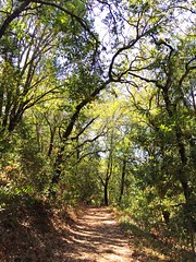 A trail at Annadel State Park in Sonoma County, California. (harminder dhesi photography) Tags: enjoying view bayarea norcal green california santarosa park sonomacounty sonoma trail trees nature summer outdoors hiking landscape s3 vscocam vsco