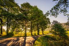 Light and Shadow (impossiblejoker) Tags: light shadow sun tree nature landscape countryroad landstrasse licht schatten landschaft natur bume sonne wiese ebbe morgenlicht d610 nikon