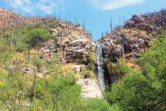 Tucson, AZ (Paige_Terhune) Tags: like comment follow first nature landscape cactus water waterfall desert arizona az tucson