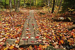 Path to Where? (Eyes Open To Life) Tags: vermont underhill hike path fall autumn leaves nature woods trail