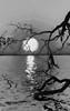 Wandering Through an Alternative World (JDS Fine Art & Fashion Photography) Tags: moody gothic sunrise artistic tree water elitegalleryaoi bestcapturesaoi