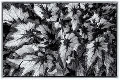 Chicago Botanic Garden (FerencSeitz) Tags: ferencseitzphotography nikon d800e nikor chicagobotanicgarden silverefexpro2