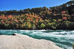 Devils Hole Rapids (Cominupshort) Tags: nikond5000 niagara river nature reserve rapids water autumn trees escarpment