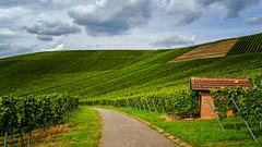 Weinsaison (MSPhotography-Art) Tags: autumn wein badenwrttemberg herbst nature wanderung germany wandern deutschland weinberge landschaft natur landscape