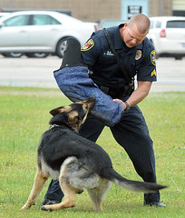 DogSchool3 (prophoto2008) Tags: usa dog training nc police northcarolina wilson wilsoncounty k9