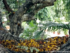 DSCF3582 (Evit John) Tags: flowers autumn trees nature yellow clouds dead photography friend ilovephotography manipal