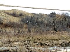 Wanuskewin Trails (kevinmklerks) Tags: park history archaeology nature trails ravine bison grasslands hunters