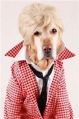 Dog in fashion (Dona Mincia) Tags: dog cute art love co fashion arte humor moda cachorro