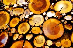 May 25: Wood Wall Art (earthdog) Tags: wood art nikon fav20 fav30 fav10 project365 2013 fav40 afsdxvrzoomnikkor1855mmf3556g d5100 3652013 nikond5100