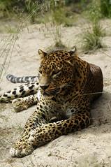 _DSC4665 (MvdBroek Fotografie) Tags: macro sony alpha tamron 90mm emmen noorderdierenpark dierentuin a55 tamton
