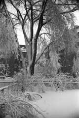 020369 08 (ndpa / s. lundeen, archivist) Tags: trees winter blackandwhite bw snow storm 1969 film monochrome boston 35mm fence buildings ma blackwhite massachusetts nick snowstorm 1960s february snowfall blizzard beaconhill winterstorm dewolf heavysnow mtvernonsquare bigsnow recordsnowfall recordsnow nickdewolf photographbynickdewolf