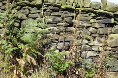 Weeds and a Stone Wall. (biro2000) Tags: wak bingley westyorkshire walking