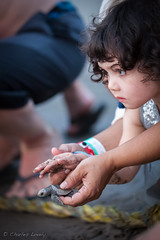 untitled (7 of 35) (charles lovely) Tags: mexico charleslovely portrait wildlife people kids outdoor puertavallarta seaturtle