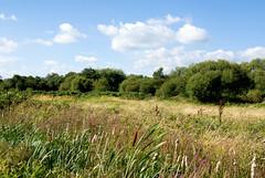 Walthamstow Marshes (29 Photos) Tags: london capitalring marshes marshland walthamstow outdoor