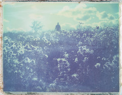 Thistle field (Maija Karisma) Tags: polaroid instant pola littlebitbetterscan polaroid100landcamera 661 peelapart expiredfilm nature
