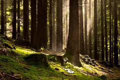 Morgens im Wald (blumenandy) Tags: arrach bayerischerwald