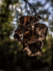 bokeh forest (sami kuosmanen) Tags: leaf luonto light lehti bokeh nature north europe suomi sun summer finland forest flash salama dof mets kuusankoski kouvola kes puu taivas tree sweet 35