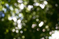 Sunny days (KevPBur) Tags: bokeh canon650d canonkissx6i canonrebelt4i canonefs18135mmf3556isstm green impressionism latesummer leaves sunnyday treecanopy canon650dcanonkissx6icanonrebelt4i