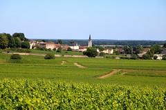 Village d'Aloxe-Corton / Cte de Beaune (Charles.Louis) Tags: vin vigne viticulture ctedor bourgogne corton aloxecorton village plante nature environnement cte beaune vignoble