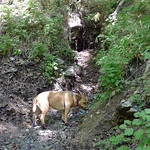 Bella in Icehouse Canyon thumbnail