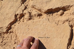 Stamped brick from Nebuchadnezzar II's palace at Babylon (Sumer and Akkad!) Tags: stamped mud brick babylon babel iraq nebuchadnezzar palace cuneiform inscription ruins fragment mesopotamia