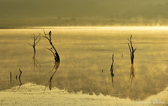 Early morning reflections (Sumarie Slabber) Tags: pilanesbergnationalpark sumarieslabber yellow dam morning misty mist silhouettes bird southafrica glow reflections landscape