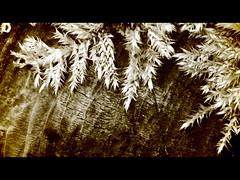 Mossy bark (frankhimself) Tags: algae lichens moss tree bark goldfocus