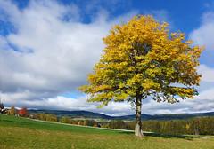 Ein schner Herbsttag (Mariandl48) Tags: landschaft ahornbaum dorf wald felder sommersgut wenigzell steiermark austria
