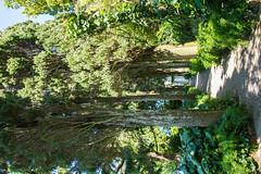 Capri - Villa San Michele Gardens 4 (Le Monde1) Tags: italy capri sea coast island lemonde1 nikon d610 dr doctor axelmunthe swedish villasanmichele sphinx harbour bay marble loggia busts statues art plinth gardens montesolara stmichael museum anacapri