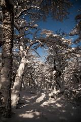 Dream forest (eMinte) Tags: forest magic snow patagonia lenga awasi luna nieve sierracontreras nothofagus nothofaguspumilio