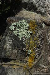 Rock Wall Colors (lefeber) Tags: highlandfalls hudsonvalley newyork town village smalltown rural architecture fence rockwall stonewall masonry algae lichen