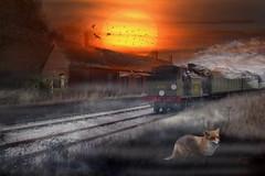 Lydd Station (brian_stoddart) Tags: fox trains railways deserted sun