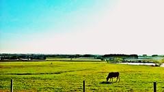 WP_20161014_17_26_58_Pro (1) (gesielfreire) Tags: farm landscape collor paisaje paisage paisagem sky