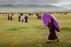 . (Joanna Mrowka) Tags: girl monk life outdoor landscape yarchen gar sichuan china tibetan umbrella rain