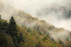Deep forest (Teruhide Tomori) Tags:       aboupass mountain landscape gifu nagano r158 chbusangakunationalpark tree nature japan forest mist autumn   fog rain  okuhida