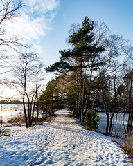 Polku (Jori Samonen) Tags: path tree winter snow sky cloud seurasaari island helsinki finland nikon d3200 180550 mm f3556