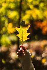 _DSC01672 (EasyandMe(~)) Tags: foliage newengland waltham boston fall autumn leaves bokeh holding