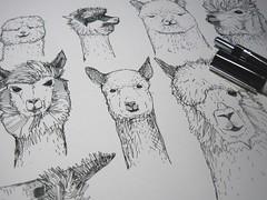 drawing my alpacas (Scrummy Things) Tags: alpaca alpacas ink pen drawing illustration wip workinprogress animals farming sharonturner scrummy cuteness cute nursery spoonflower society6 redbubble denydesigns